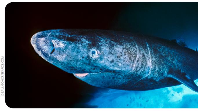 #SharkLeague
