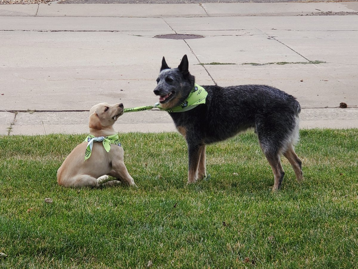 Our #PetPicFriday pups this week are Prince and Ruger! While Prince is a #safedigging pro, his…