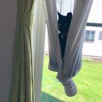 カーテンをハンモック代わりに使用する猫!