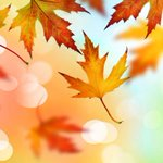 Fall into autumn with these energy-saving tips!  🍁 Let the sunshine in to warm up your home 🍁 Seal your leaks before cooler weather arrives 🍁 Upgrade to a programmable thermostat 🍁 Prep heating vents to ensure your furnace runs efficiently