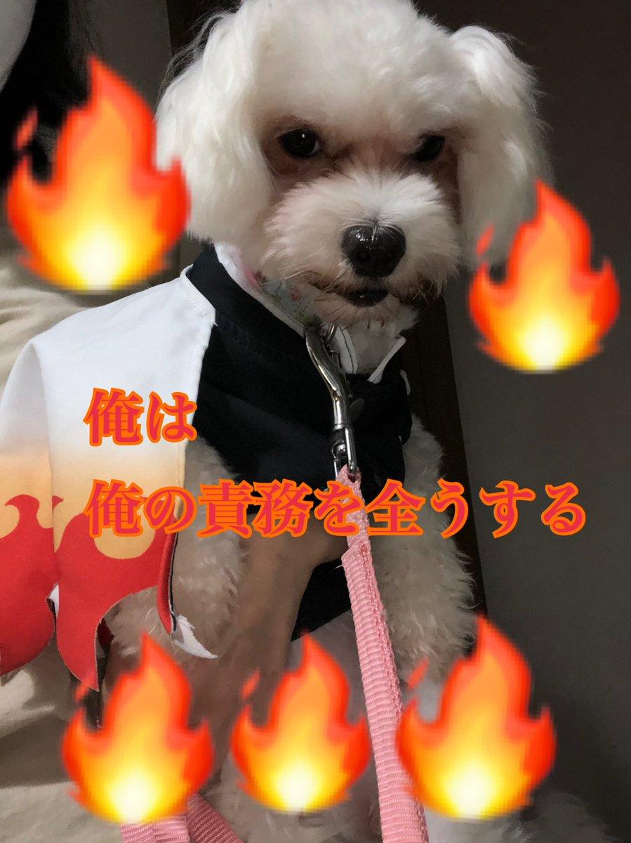 「博士になれ杏寿郎」猗窩座からの誘いをまたしても断る煉獄さん!