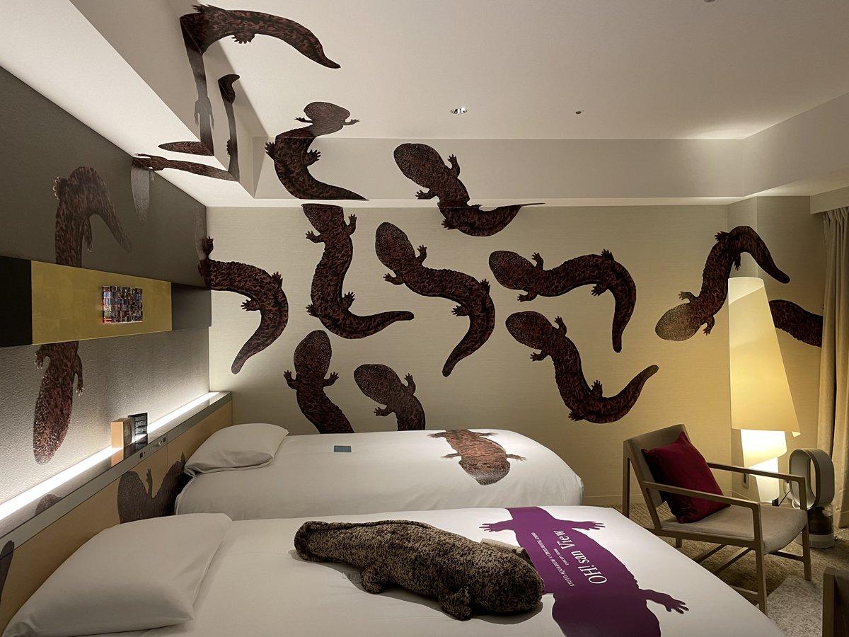 予想以上に多い?オオサンショウウオまみれのホテルの部屋!