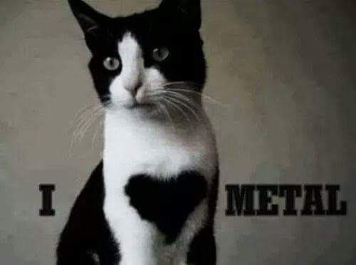 Happy #Caturday  #MetalMusic  #RockAndRoll 1🎵🎶🎼