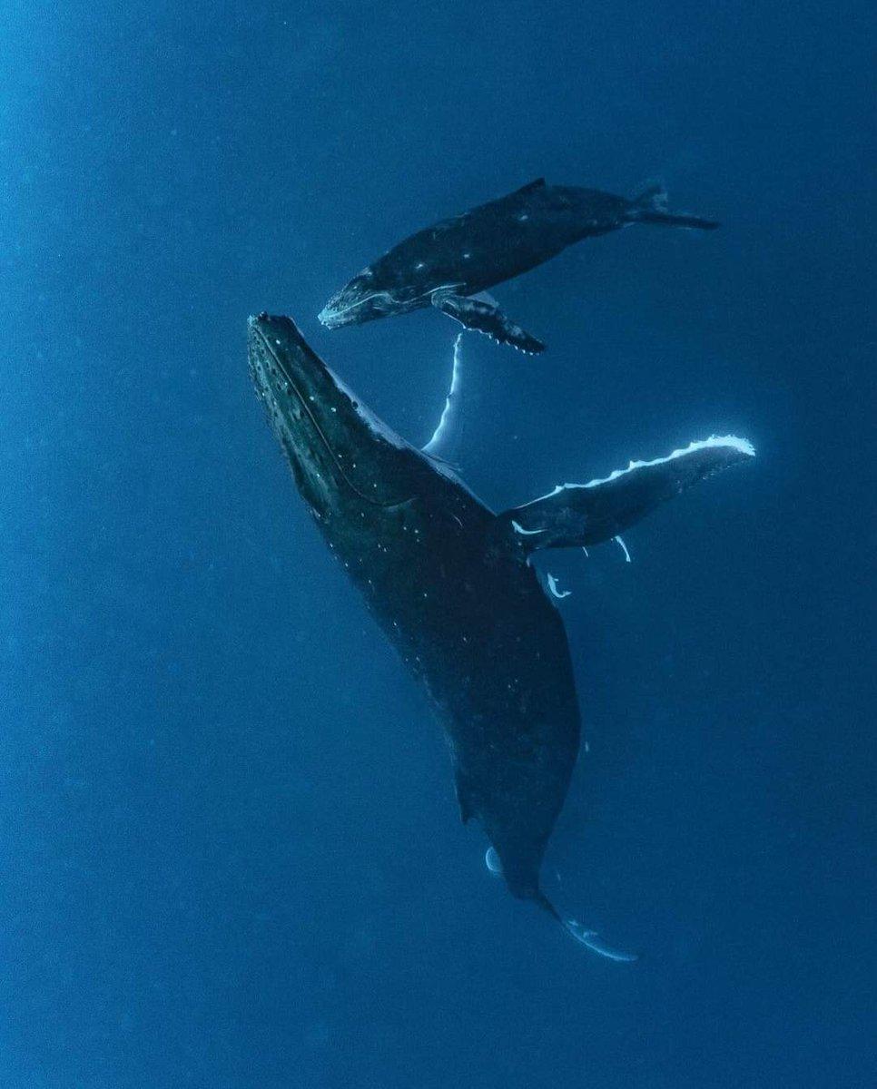 #BuenasNoches, salimos del agua, por hoy se acabó, mañana más y mejor. Buen azul.  Y recuerden ensalitrado se vive mejor.  #buceo #dive #diving #mediomarino #vidamarina #oceandivecanarias  📷 de Maru Brito https://t.co/6pSlDQgLkO