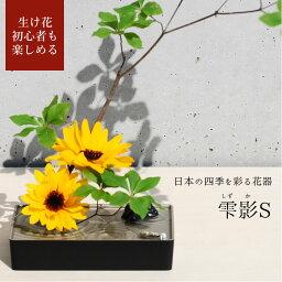 torajishi photo