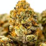 Image for the Tweet beginning: #cannabiscommunity #marijuana #cannabis SUNY Albany