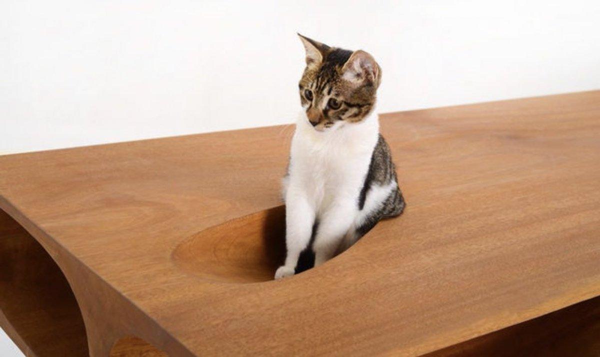 人とネコが共存するデスク?まさに猫のためのテーブルがこちら!
