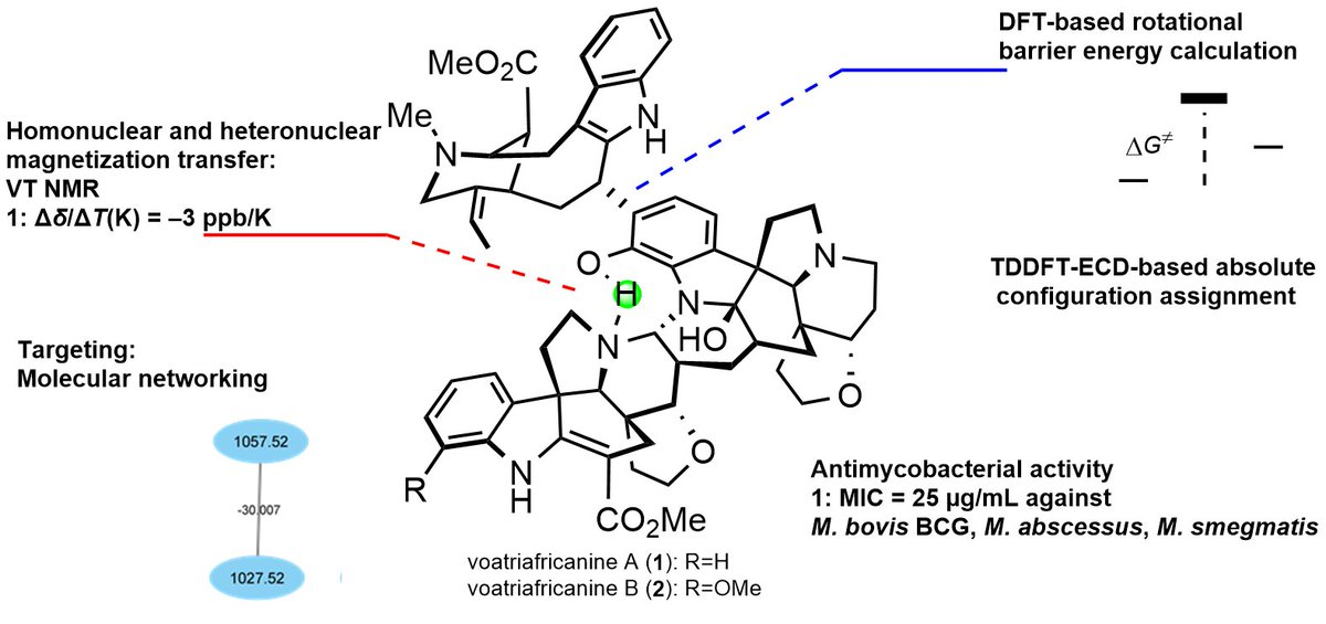 OMGosh what a beautiful alkaloid structure isolated from Voacanga africana (Apocynaceae)🤩   Outstanding work by the French dream team of #Alkaloids #NaturalProductsChemistry👍👏  This is definitely what we called a complex molecule 😅 Any volunteer to tackle its total synthesis!