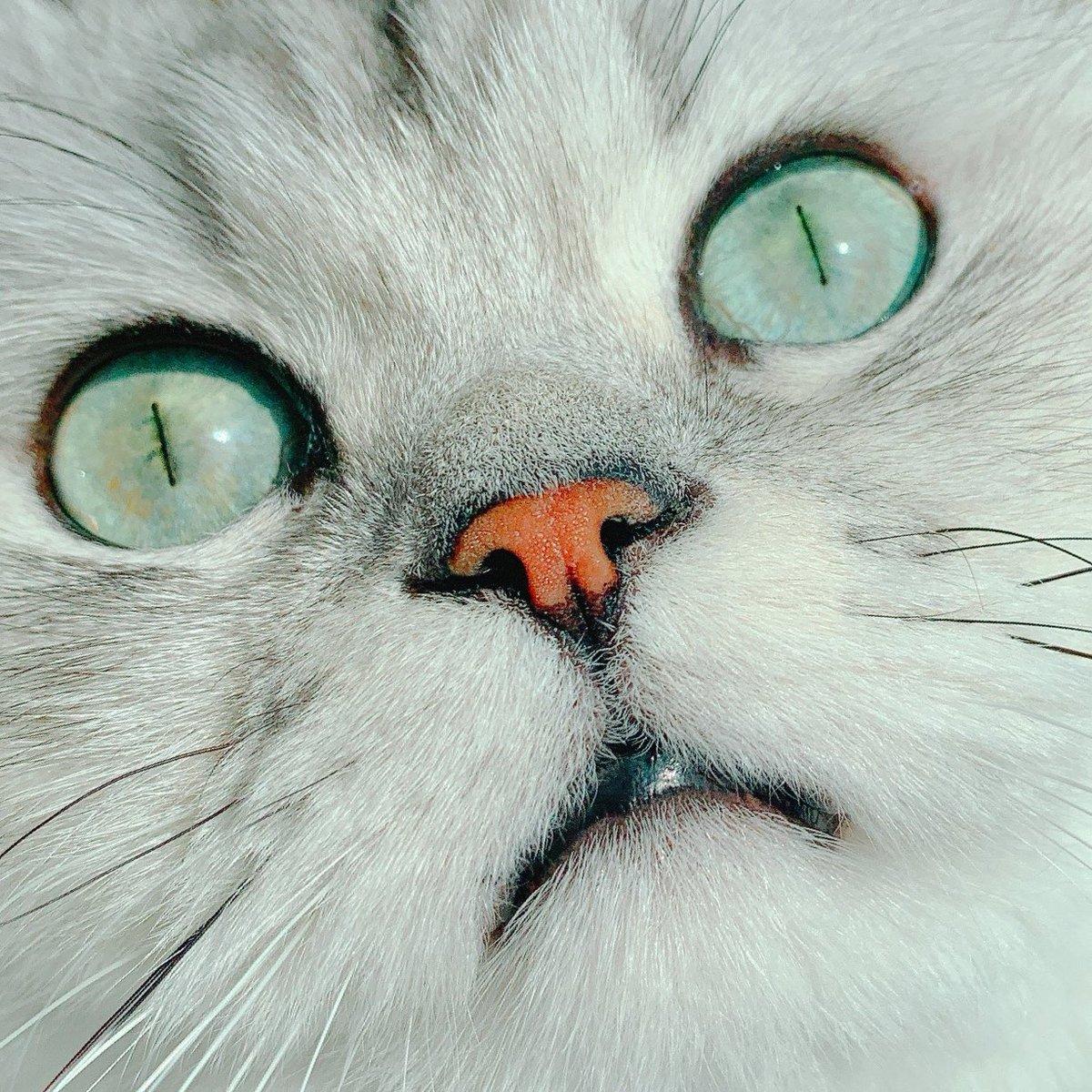 이거또봣네.. 눈이 문제인건알겟는데. 모양새는비스무리한디 왜이롷게 이상하고 기분나쁠까? 햇는데 애초에 고양이눈은 흰자가 없음 (잇긴한데 억지로 잡아 벌리지 않는한 안보인) 그니까 저건.. 갓벽한 인간의 눈인거다  거기에 고양이답게한답시고 동공 축소된거 얼렁뚱땅 넣으니까 더웃긴거임