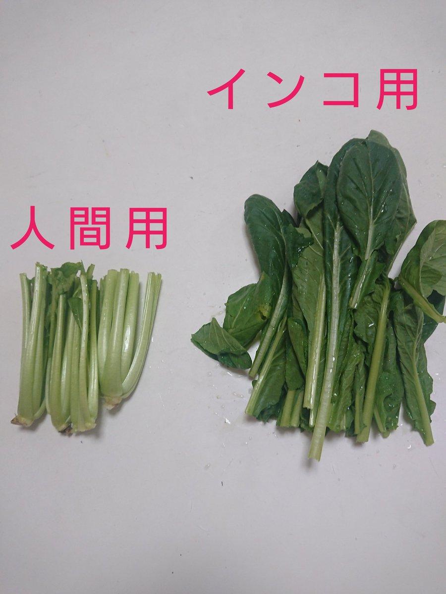 小松菜をペットと人間用に分けると…。人間用がしょぼくなるw