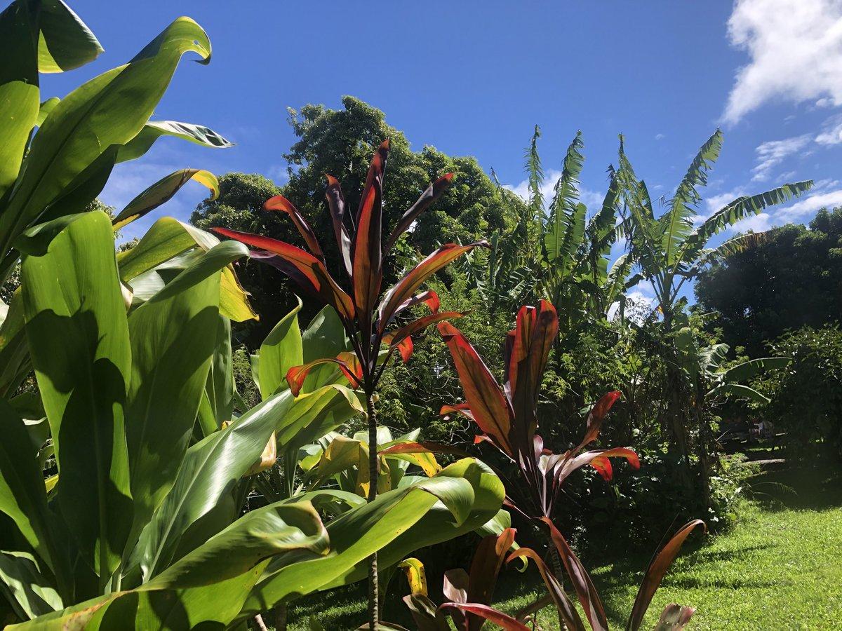 test Twitter Media - Sun coming out in Haiku. #cmweather #Maui #Haiku #magicalMaui #Mauinokaoi https://t.co/PoWxyaMBpM