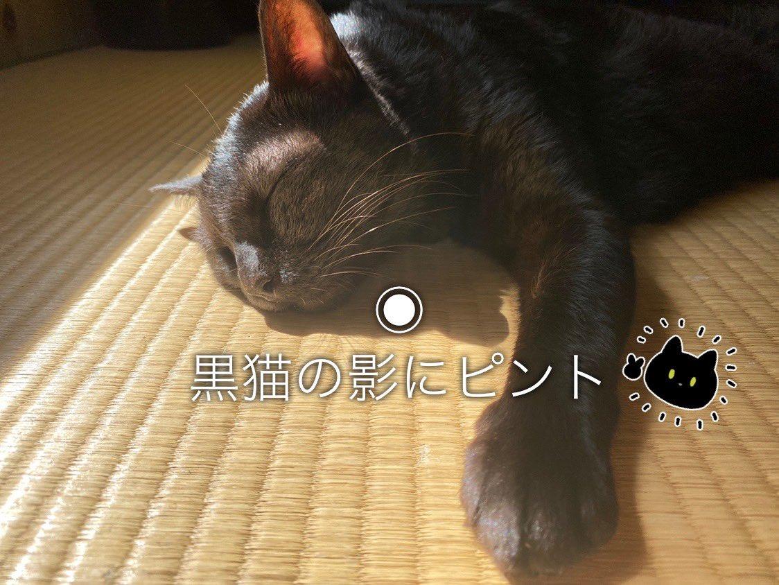 黒猫の写真撮影のメモ📝
