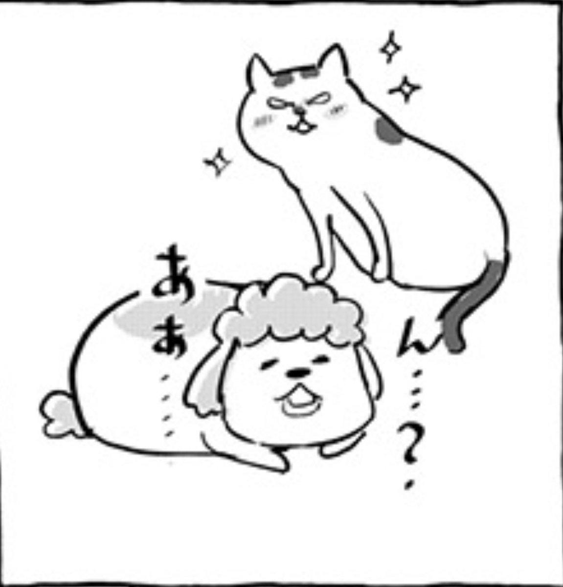 久しぶりに会った実家の17歳おばあちゃん猫に?猫語翻訳アプリを向けてみた結果!