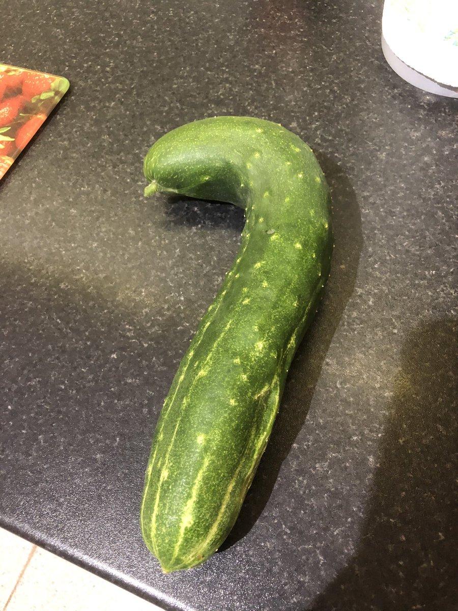 @WestParkGoole @YorkshireBloom @MaryBir88192965 @uptonuponsevern @BalhamBeautify @StaininginBloom @LondonInBloomUK @BonnieBlantyre @BloominFarnham @LeominsterBloom @KingBaggyking @kingsbridgein #my greenhouse #wobley cucumber #bloomhour 🍀🌿👍