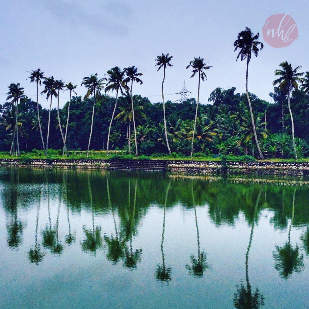 Nature Love..💕 #kerala #village #beautiful #nature #godsowncountry #india #naturephotography #love #photooftheday #travel #picoftheday #art #photo #landscape #naturelovers #like #follow #happy #travelphotography #instadaily #beauty #shotoniphone #nowhereblow #nhb #youtubechann