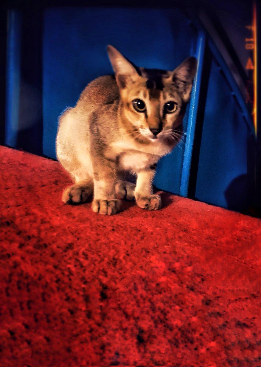 #cute #PhotoOfTheDay #cat