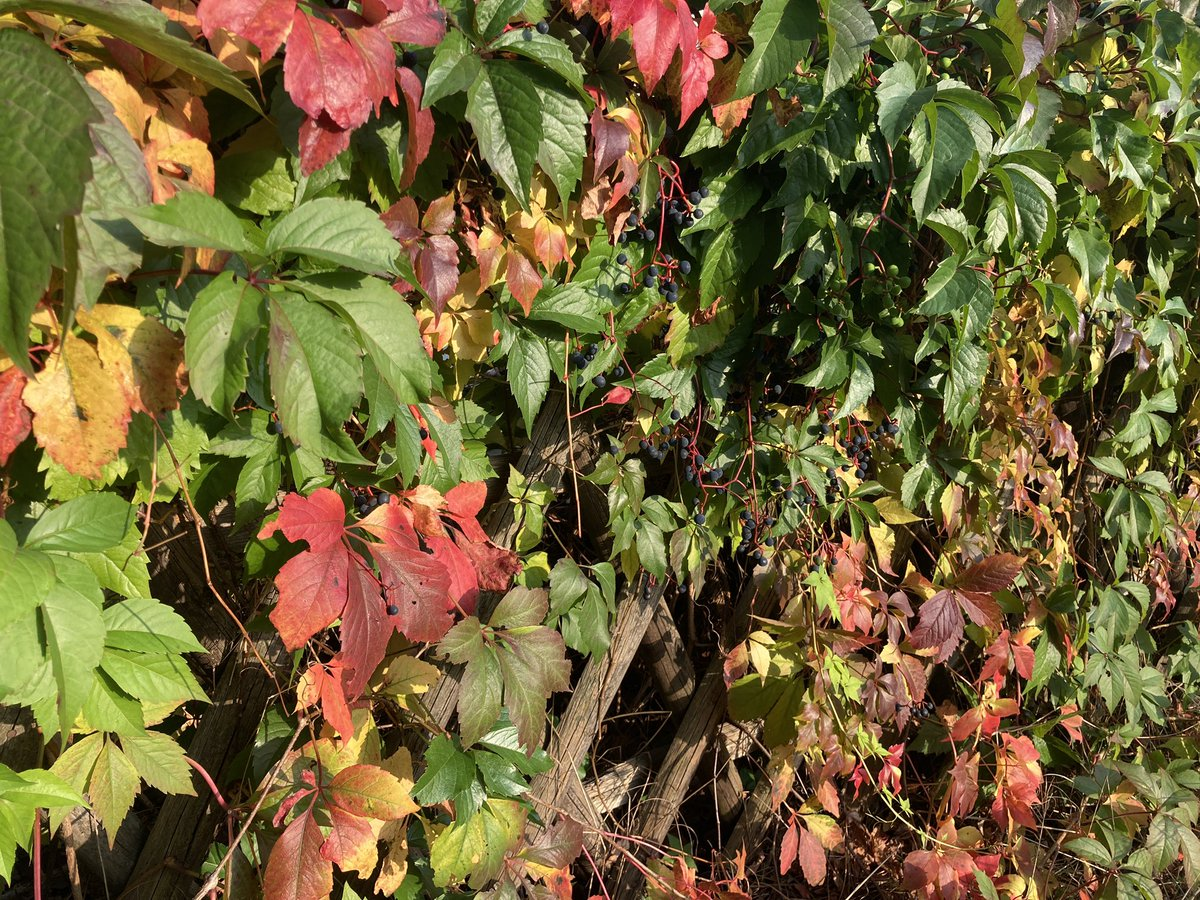 Es wird bunt in #Brandenburg. Mehr Herbstmoment bei uns auf https://t.co/kE4qlDq6AB #nachbrandenburg https://t.co/6pOT4HEyZY