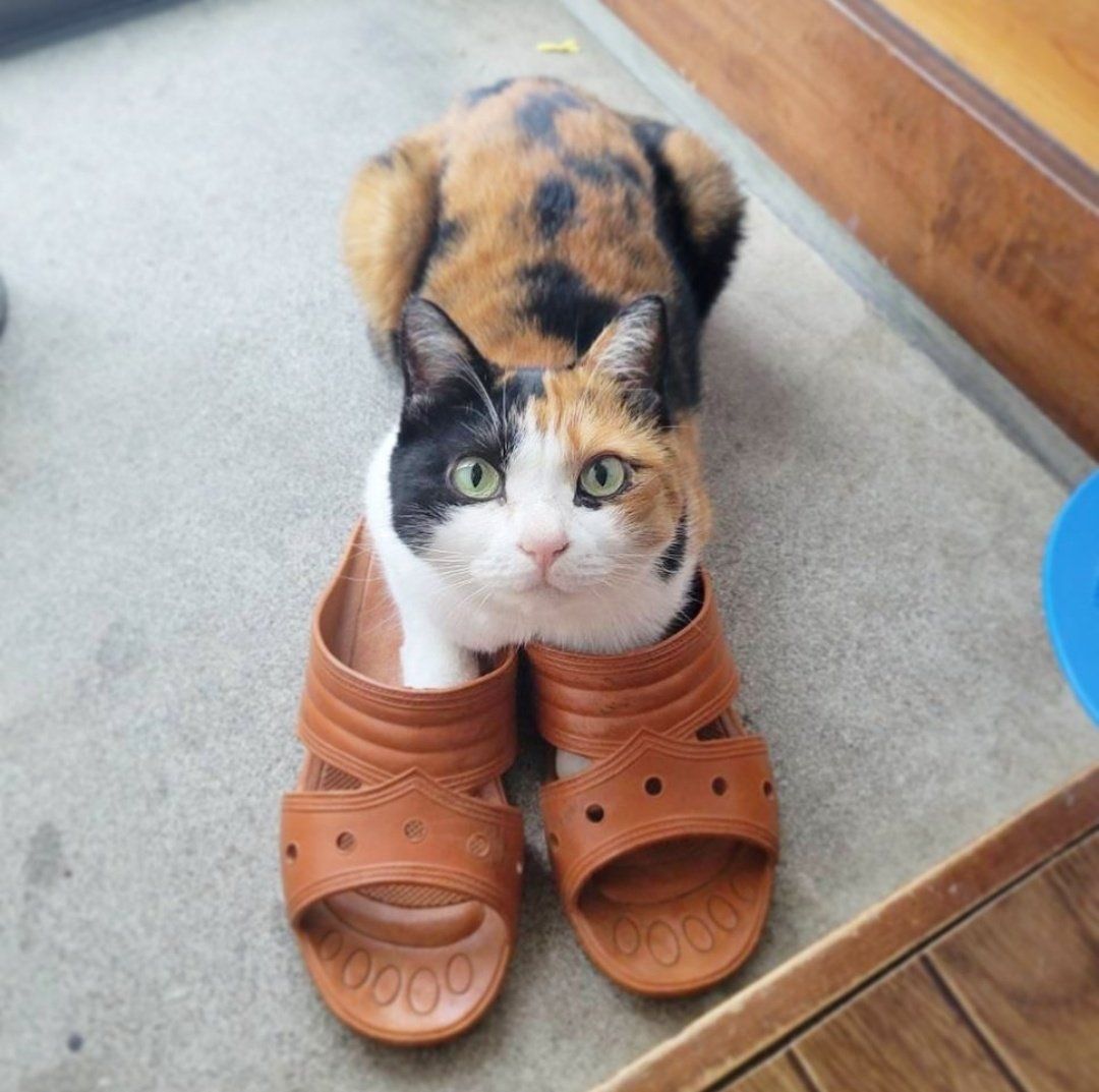 猫もスリッパを履く時代!玄関にて〜。