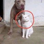 自分のことを犬だと信じている猫!特に顔と前足に注目!
