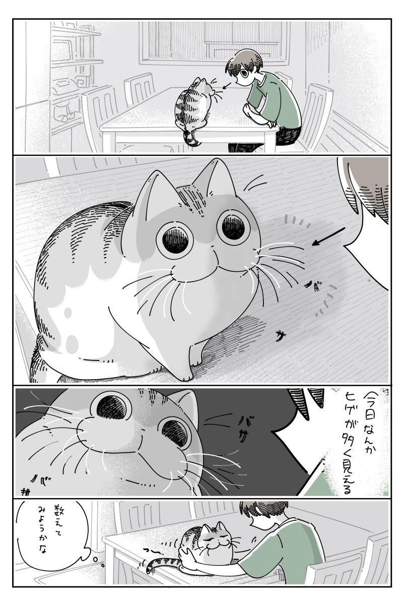 これは難易度高そう・・・!猫のひげを数えようと試みるお話!