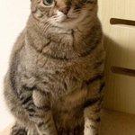 飼い猫の本音が分かる!?『猫語翻訳アプリ』