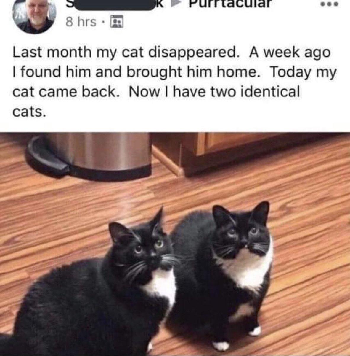 逃げた飼い猫を見つけたと思ったのに!めちゃくちゃ似てるだけの野良猫だった!