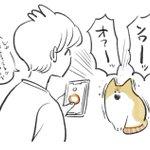 アプリを起動した途端に・・・!猫が何を言おうとしているのかアプリで確かめようとしたときのお話!