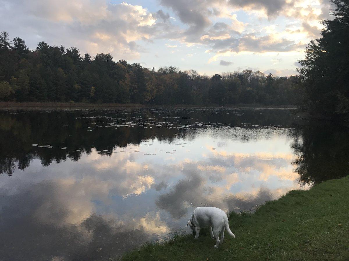 test Twitter Media - Fall in the Berkshires, Lola drinking at the pond. https://t.co/drFMvT7piR