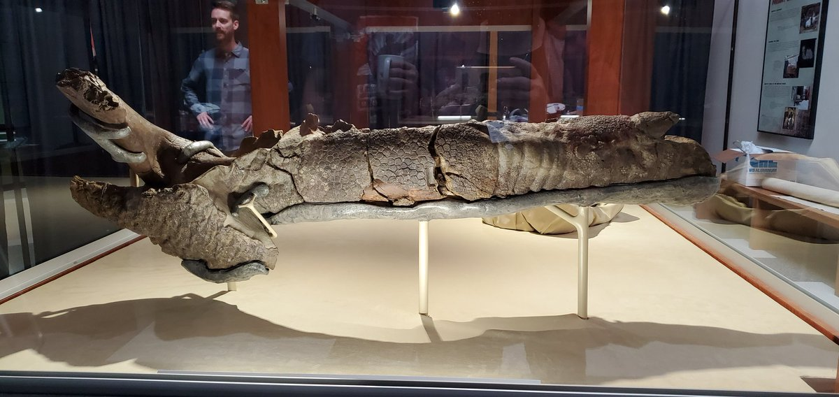 I proudly present to you: the beautifully preserved right arm of Dakota the #DinoMummy! Fingertips to right, elbow to left. Share far and wide!
