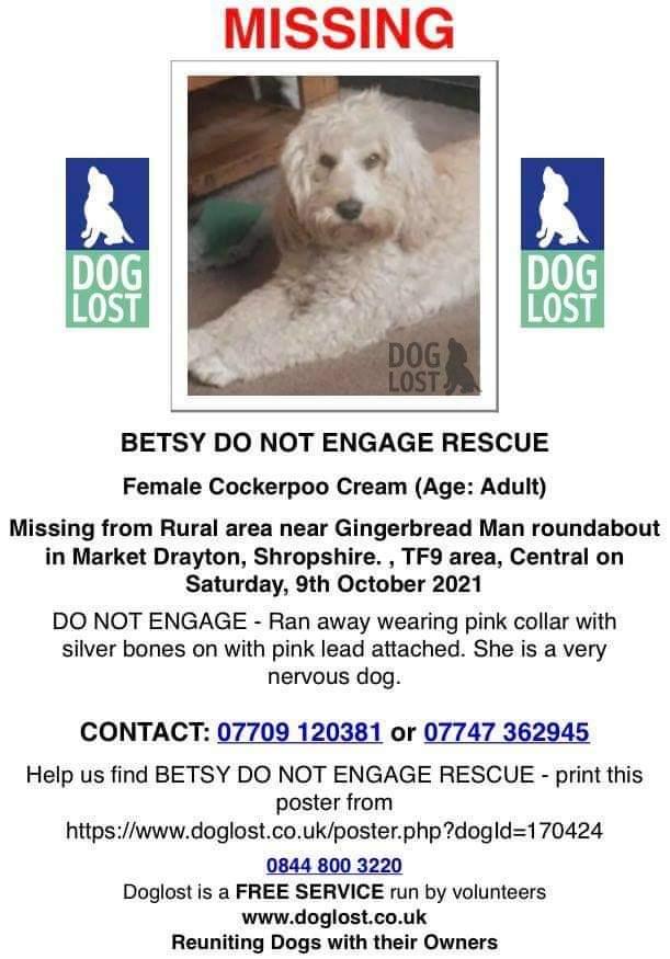 BETSY doglost page doglost.co.uk/dog-blog.php?d…