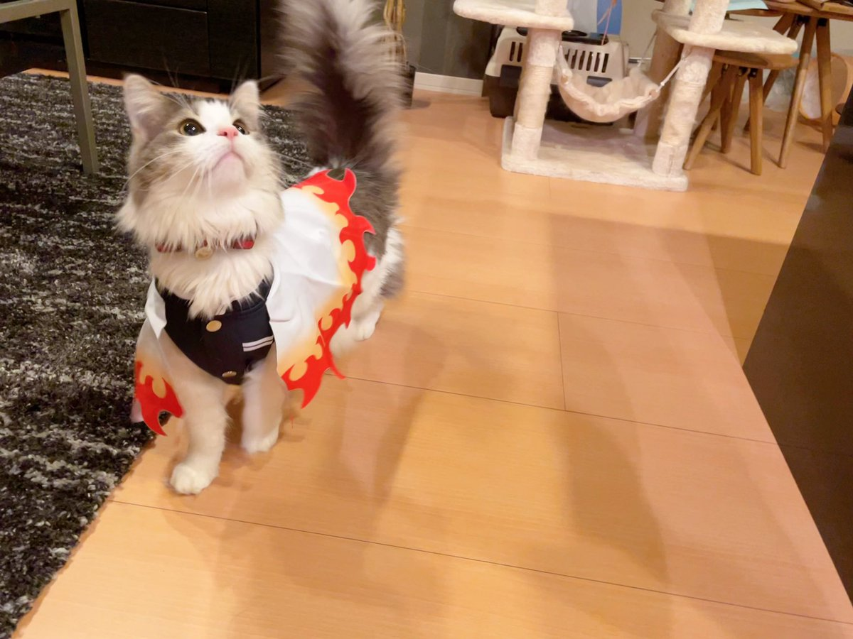 RT @NoNoel_NoLife: 鬼滅待機🐱🔥  #猫 #cat #鬼滅の刃 #煉獄さん #煉獄杏寿郎 #ニャン獄さん https://t.co/FloixzSIpz