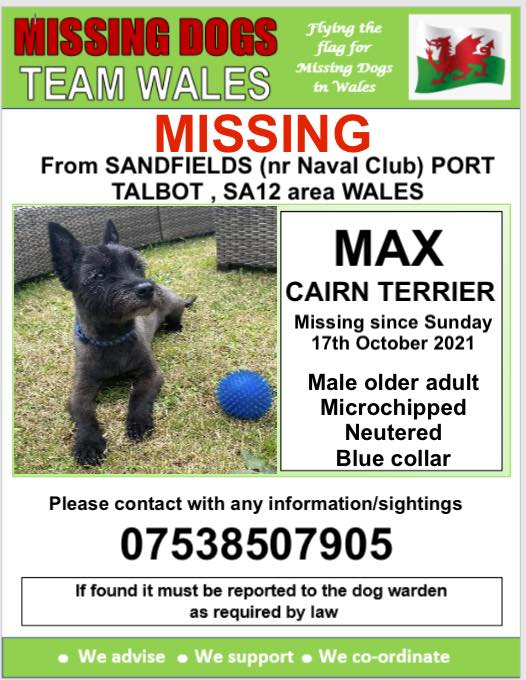 💥MAX MISSING FROM SANDFIELDS, (nr Naval Club) PORT TALBOT, SA12 area WALES 💥MICROCHIPPED AND NEUTERED Wearing a Blue collar 💥Sunday 17th October 2021 @Anthony_Bailey_ @mazzy1412 @CarolPoyerPeett @missingdogwales @rosiedoc666 @RachaelB100 @KarenFi51820768 @thedogfinder @bs2510