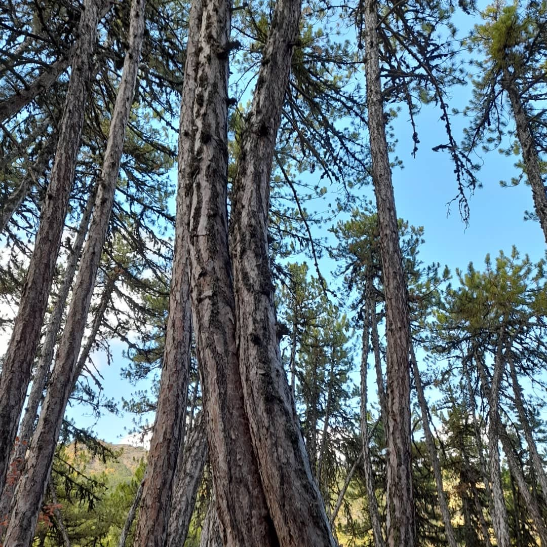 Günaydın arkadaşlar... Aşk her yerde... 🌳💕🌳... 🥰 Have a wonderful week... 😘💕 #FOREST #trees #love #mondaymotivation #MondayMorning #nature #NaturePhotography