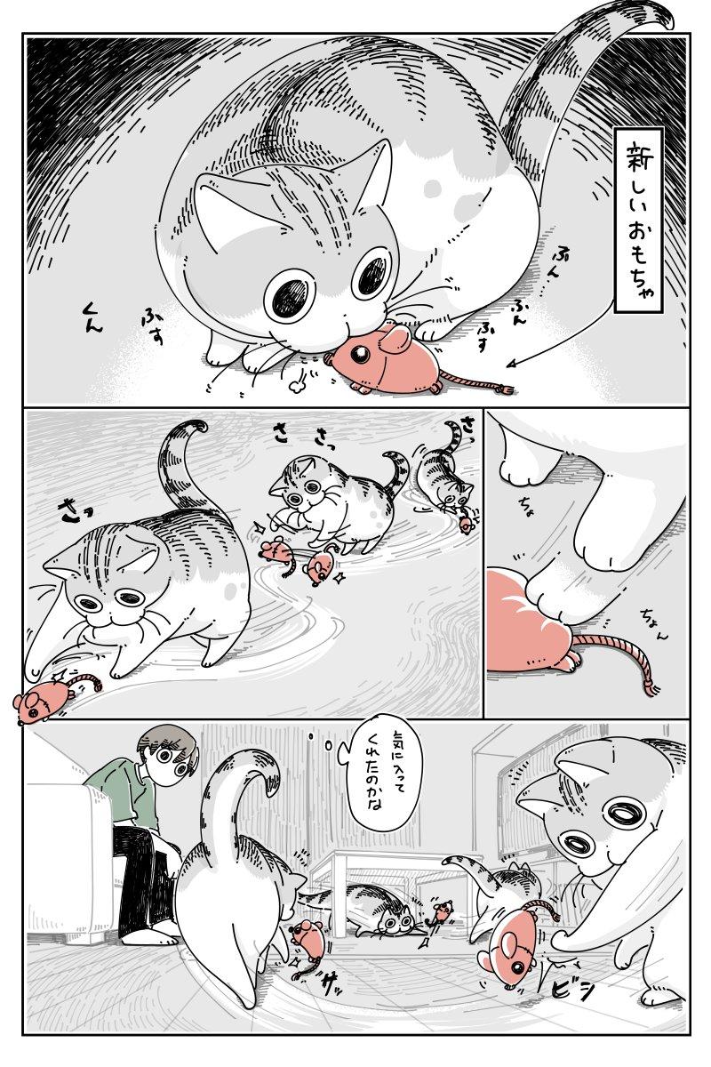 さっきまで遊んでいたおもちゃが、いつの間にか別のものに・・・!可愛くて癒される猫漫画が話題に!