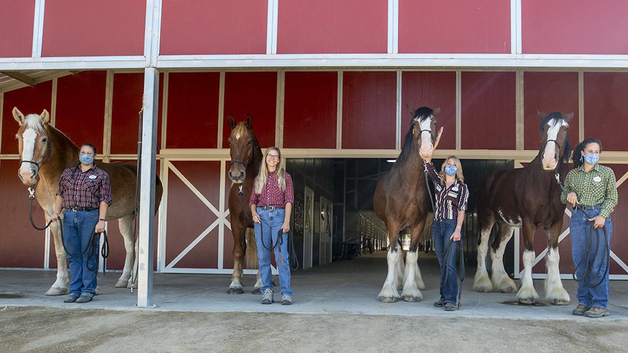 Conheça os novos cavalos do Disneyland Resort