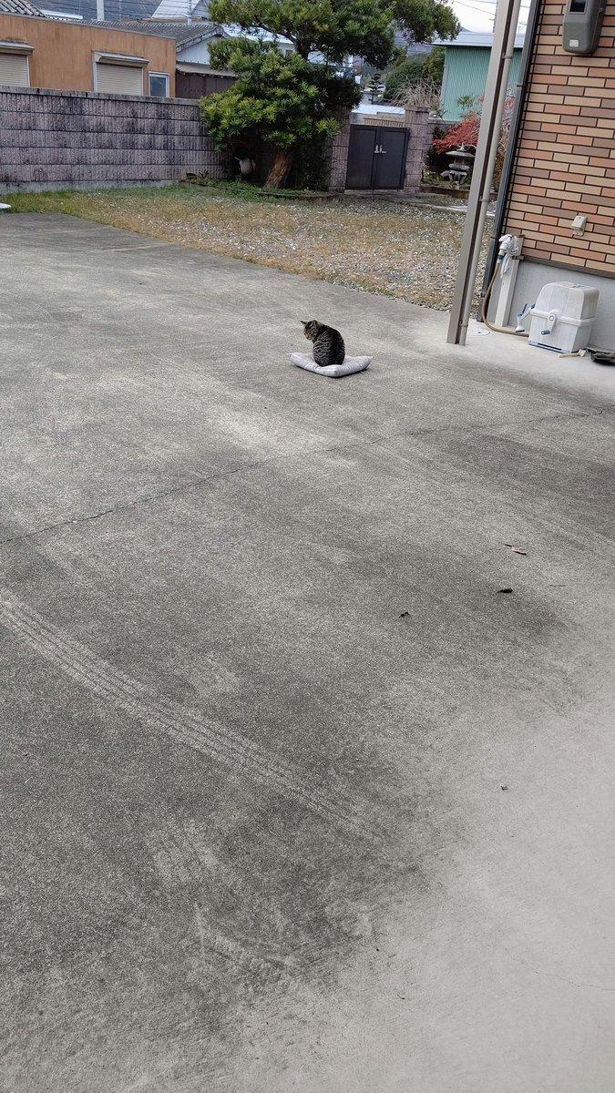 座布団が飛ばされた!急いで取りに行ったけど既に猫さんが座っていた…w