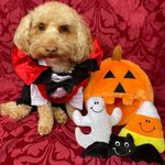 Image for the Tweet beginning: Trick Or Treat? Love From