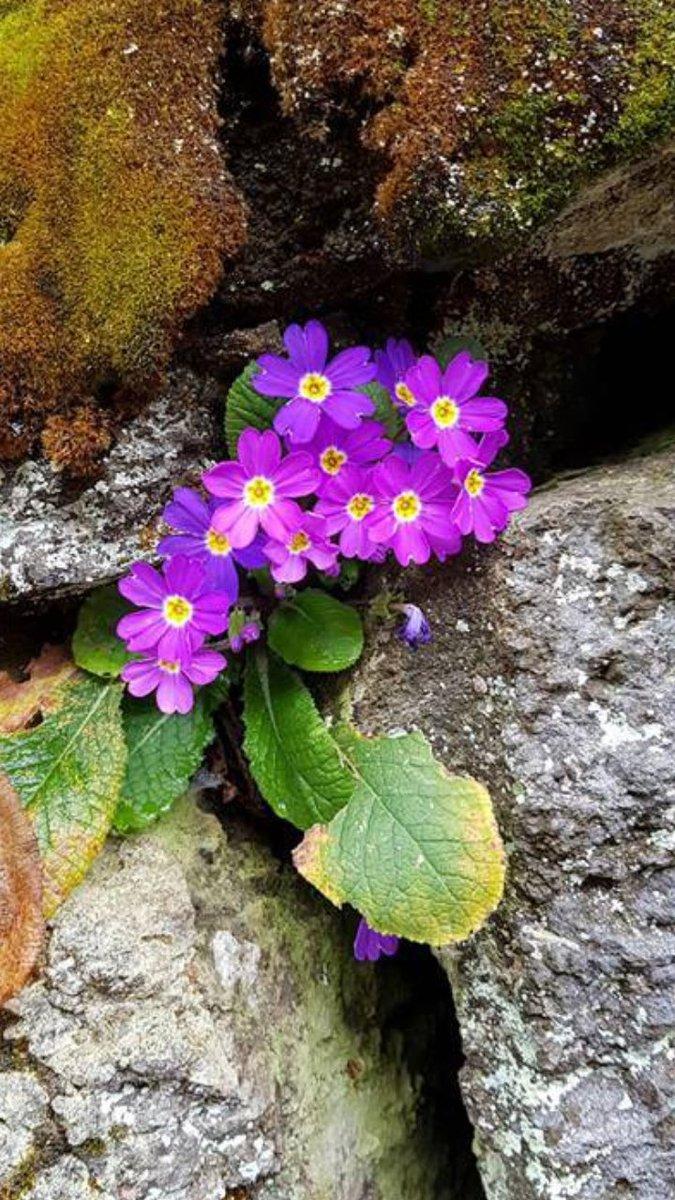 Ben diyorum umut, sen diyorsun çiçek ! #NaturePhotography #nature #photography #PhotoOfTheDay