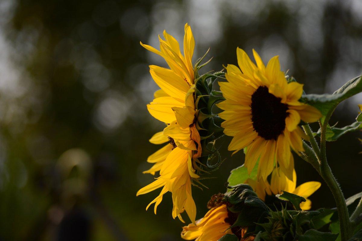 İyi Akşamlar 📷 #Nikon (110mm, 1/640sn, F4,5, ISO 100) #NaturePhotography