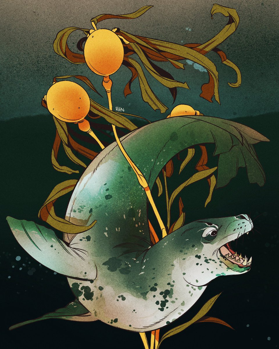 The ocean glows with bulb kelp… leopard seal commission for AJ