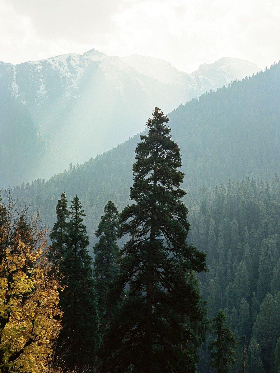 Thank you @mussarat_zia for sharing with us this splendid view from Kashmir! #DekhoApnaDesh  @JandKTourism