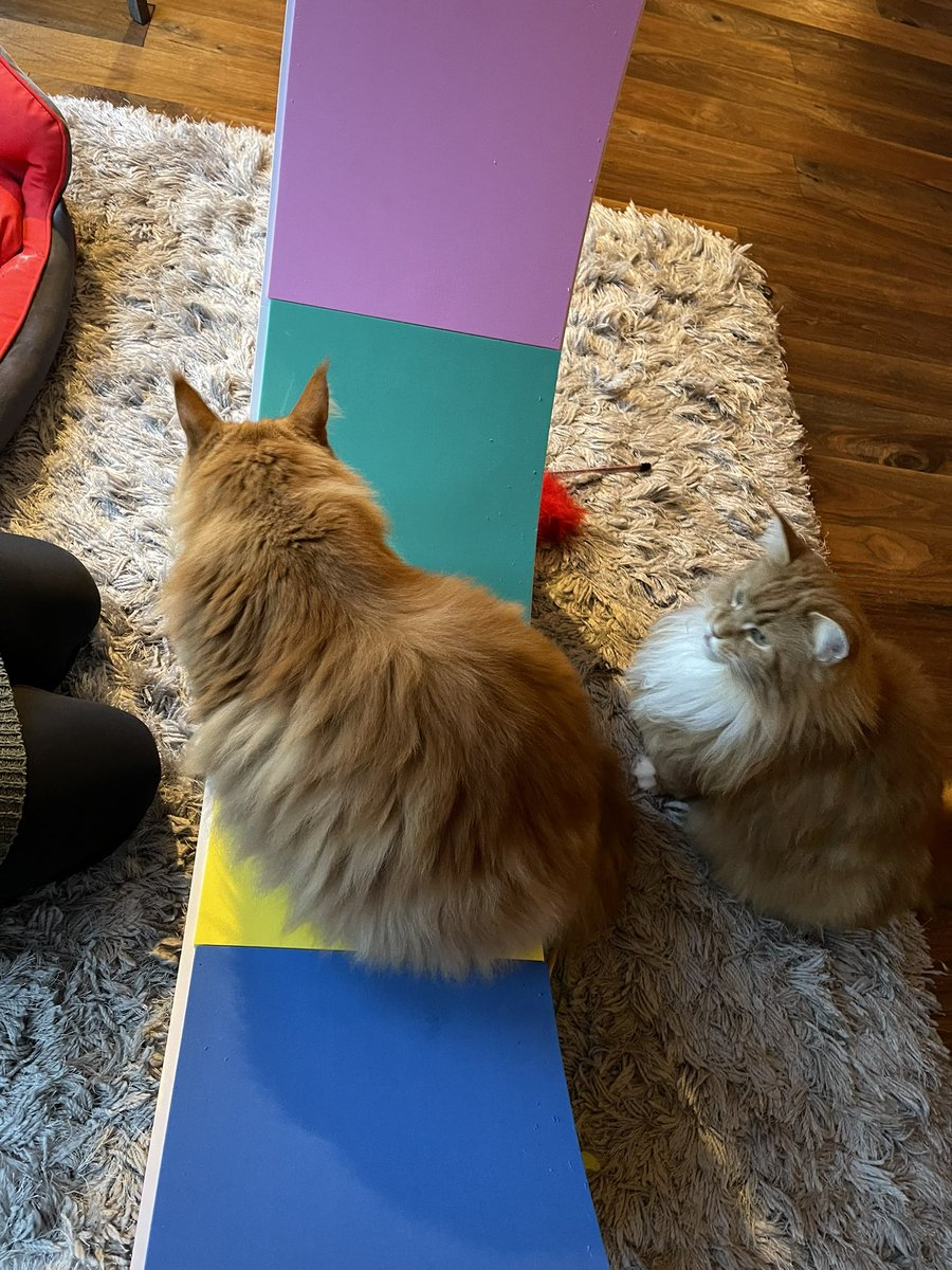B: can you bake a loaf on a wheel? G: that baking show has one B: I think those are ovens G: with tiny wheels inside? B: possibly…engines are more my thing G: well fit one to this and let's bake! B: to loaf infinity & beyond! 😹😹🦁🦁 #kittyloafmonday #teamfloof #CatsOfTwitter