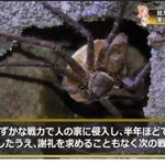 「見た目は怖いが実は役に立つ虫」。アシダカグモの説明がカッコ良すぎる