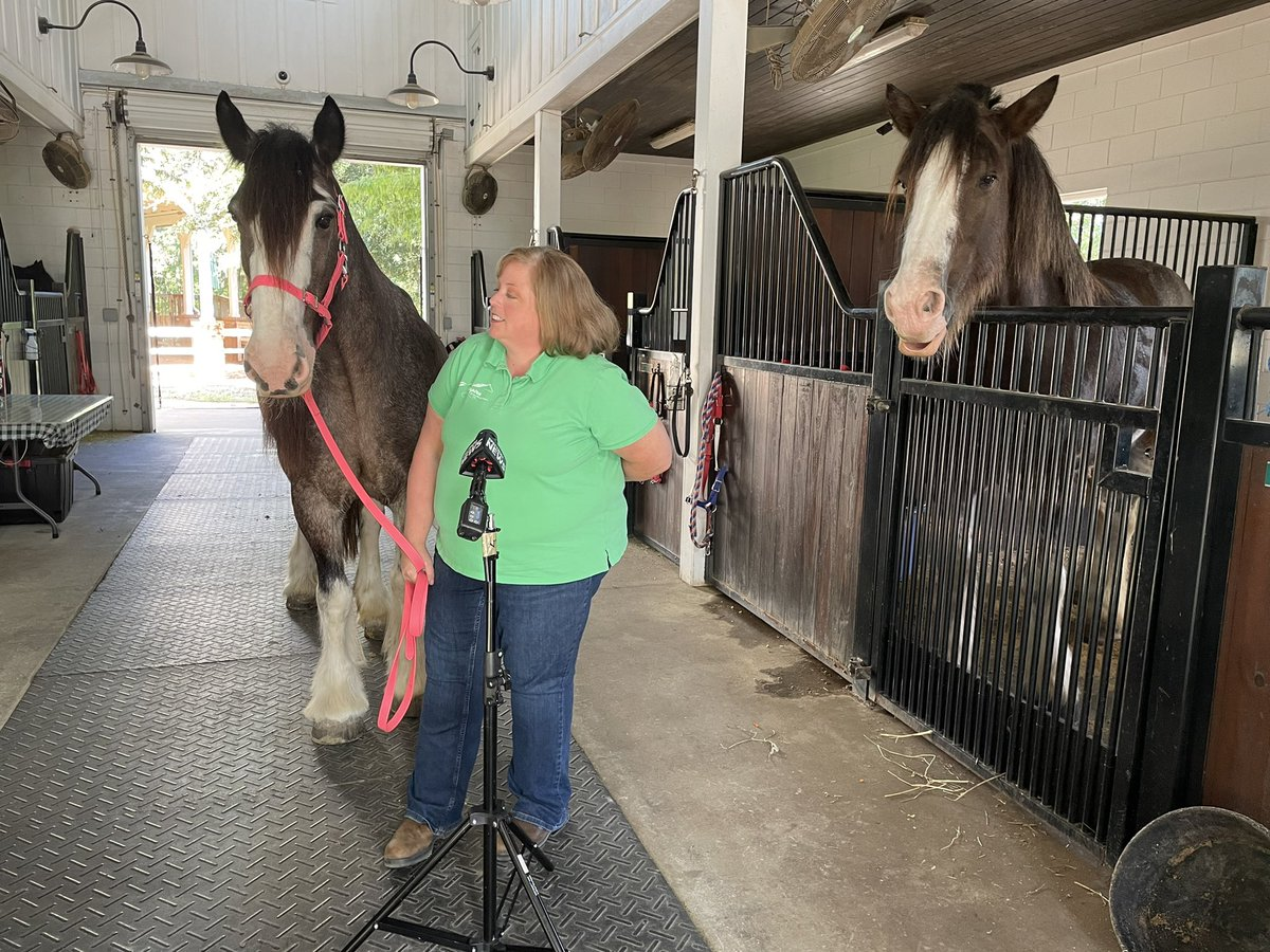 Thank you again for coming out to see us and our beautiful horses!