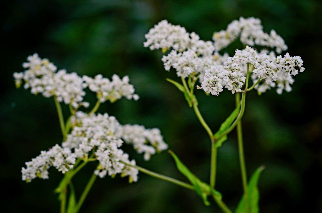 2 bedende bir akıl #Nikon 📷 #Nature #photography #flower #bloem