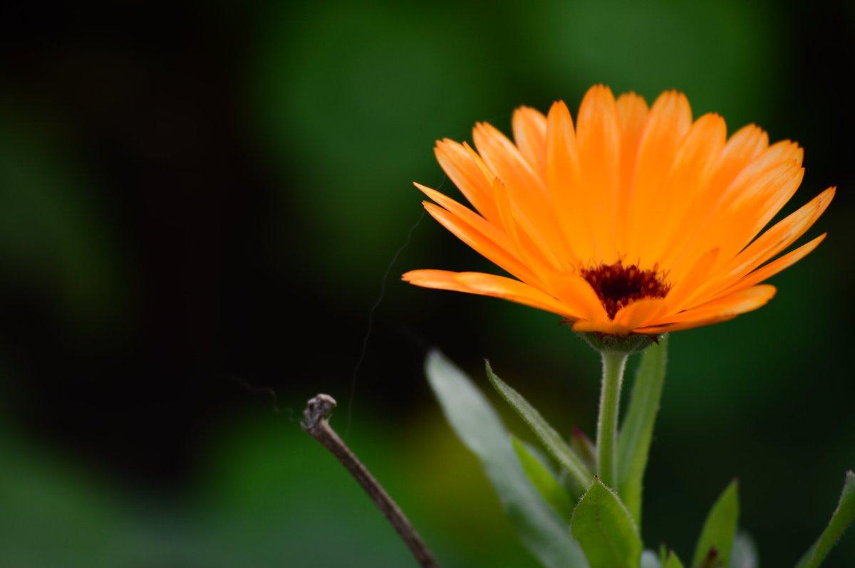 İyi Akşamlar arkadaşlar 🌿 Çiçekler sizin için. 📷#Nikon #photography #NaturePhotography #flower #doğa #bloem 📷