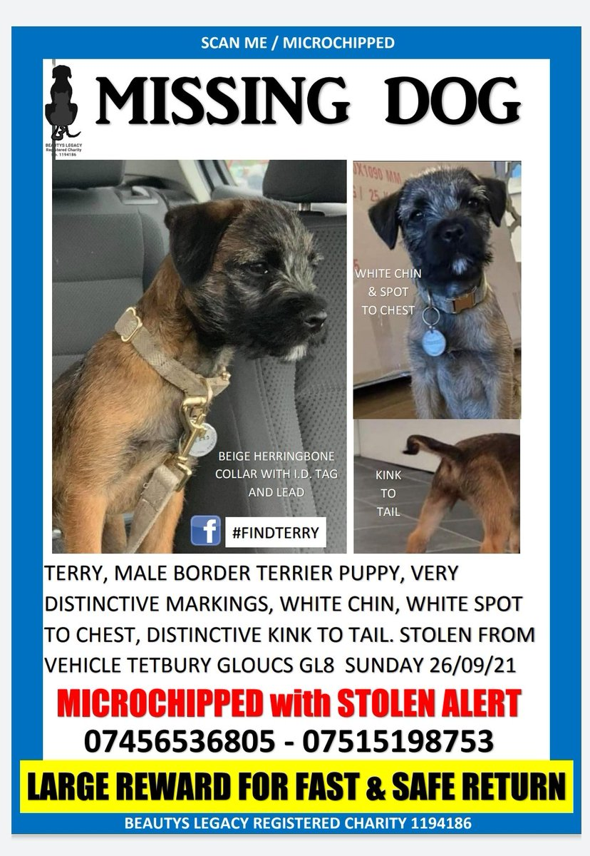CAN YOU HELP? Where is this little man? His mum is heartbroken, lost without him, & he will be just as lost without her facebook.com/groups/2686146… #borderterrier #STOLEN #PUPPY #Gloucestershire #findterry #petabduction @BBCGlos @GlosLiveOnline @GDTnews @reallorraine @davidwalliams