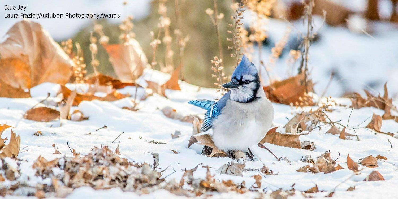 Go birds Twitter