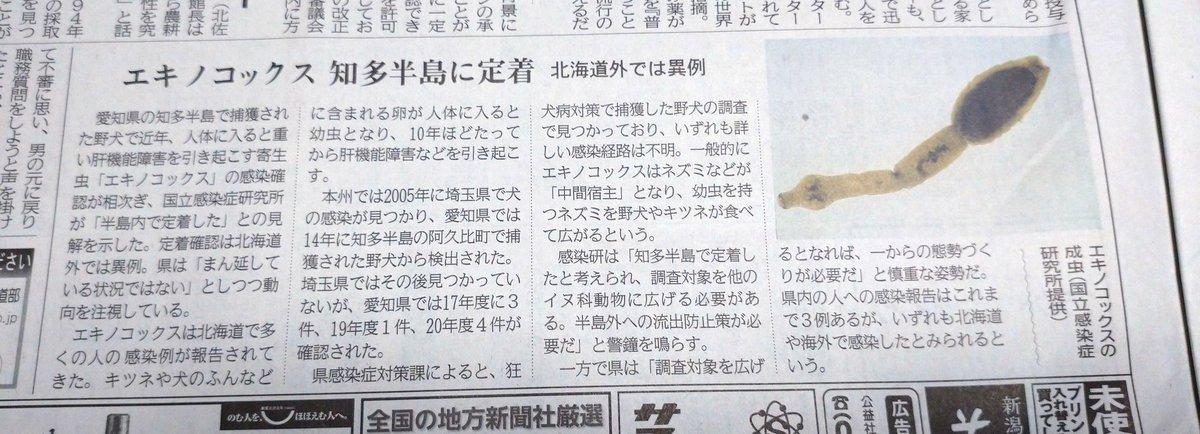 今朝の新聞 エキノコックスが知多半島に定着