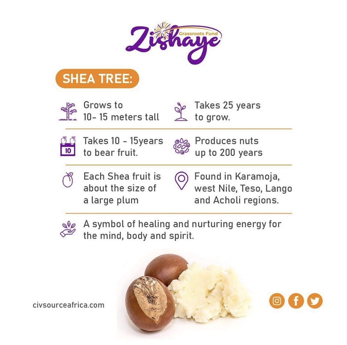 How much do you know about #sheatrees. Here's just a snippet courtesy of @civsourceafrica. @ZishayeCivFund #zishayegrassroots #nature #biodiversity #okerecity #protectsheatrees #shea #sheabutter